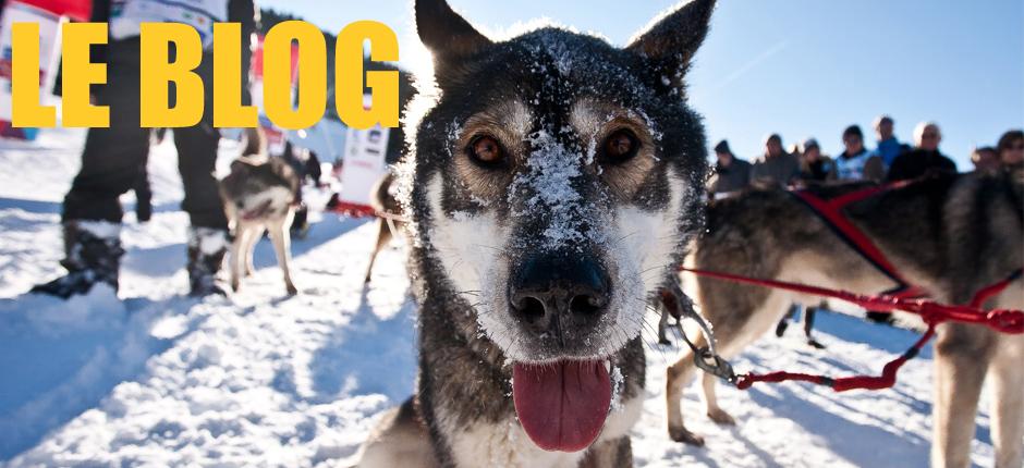 Le blog du husky Sibérien