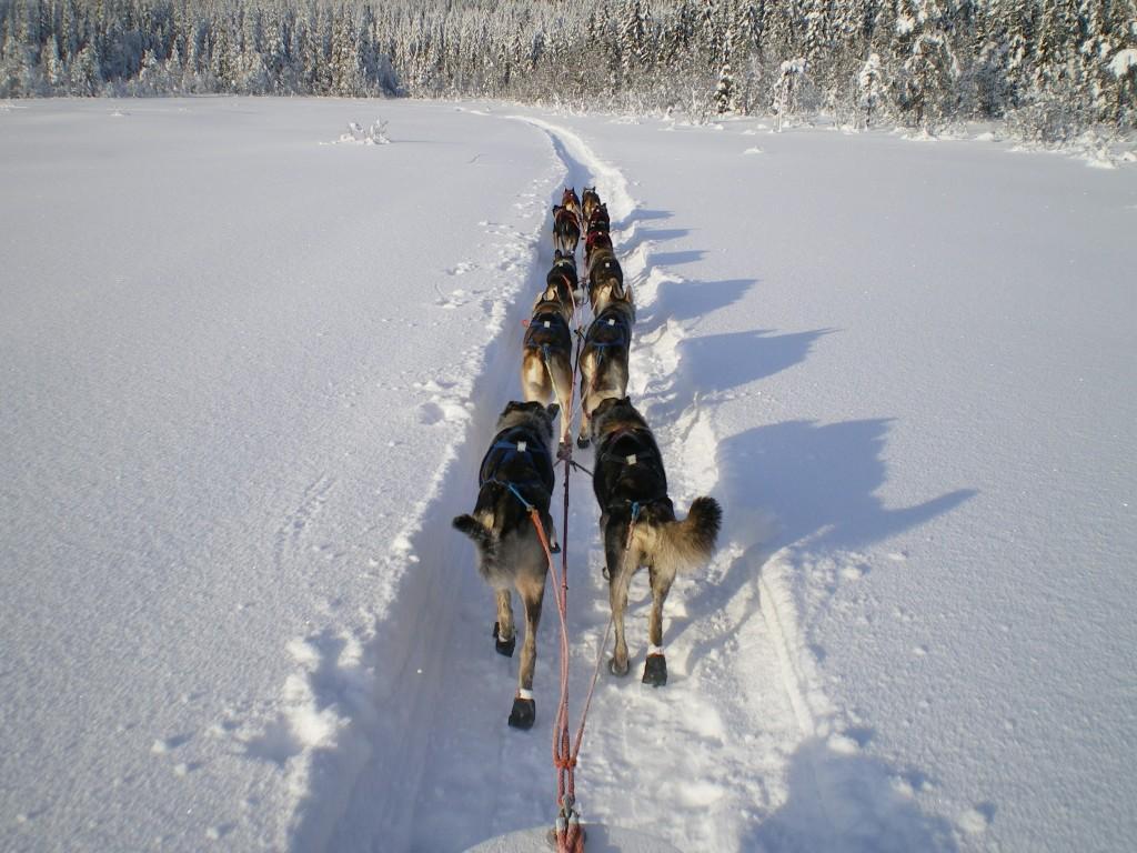 benoit,gerard,nome,norvege,femmundlopet,finnmarkslopet,traineau,neige