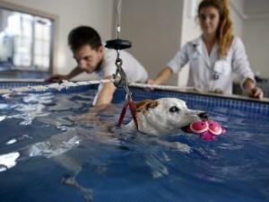 réeducation-chien-piscine-alforme